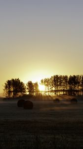 Preview wallpaper field, trees, sun, rays, fog, sunset