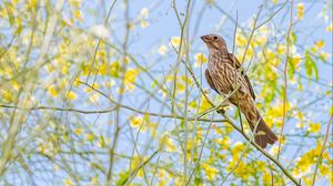 Preview wallpaper finch, bird, branches, wildlife