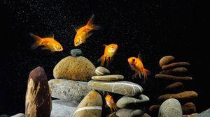 Preview wallpaper fish, aquarium, rocks, black background
