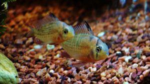 Preview wallpaper fish, aquarium, water, macro, minimalism