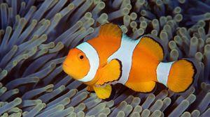 Preview wallpaper fish, bali, indonesia, underwater, sea, ocean