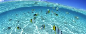 Preview wallpaper fish, flock, sea, shallow water