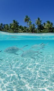 Preview wallpaper fish, flock, sea, shallow water, island, palm trees