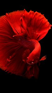 Preview wallpaper fish, red, tail