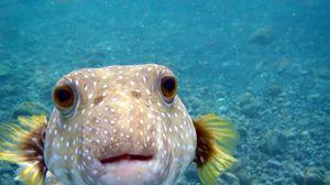 Preview wallpaper fish, water, ocean, sea, blue