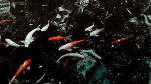 Preview wallpaper fish, water, swimming