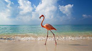 Preview wallpaper flamingo, bird, beach, sea