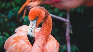 Preview wallpaper flamingo, bird, beak, plumage, neck