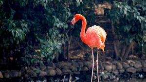 Preview wallpaper flamingo, bird, color