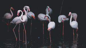 Preview wallpaper flamingo, birds, pond, reflection
