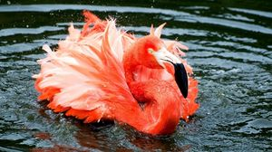 Preview wallpaper flamingo, feathers, lake, river, swimming