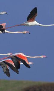 Preview wallpaper flamingo, flock, flight, sky, birds
