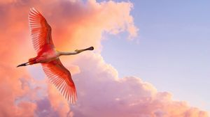 Preview wallpaper flamingo, flying, birds, sky, clouds