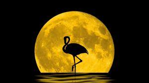 Preview wallpaper flamingo, moon, silhouette, reflection, art