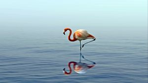 Preview wallpaper flamingo, reflection, lake, water, bird, stands