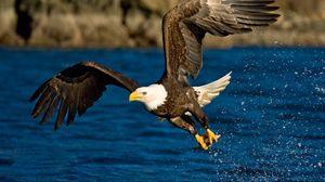 Preview wallpaper flight, wings, eagle, spray, bird, water