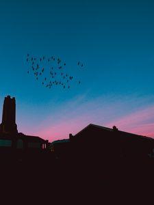 Preview wallpaper flock, birds, night, roofs