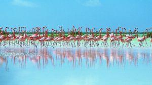 Preview wallpaper flock, pink flamingos, reflection