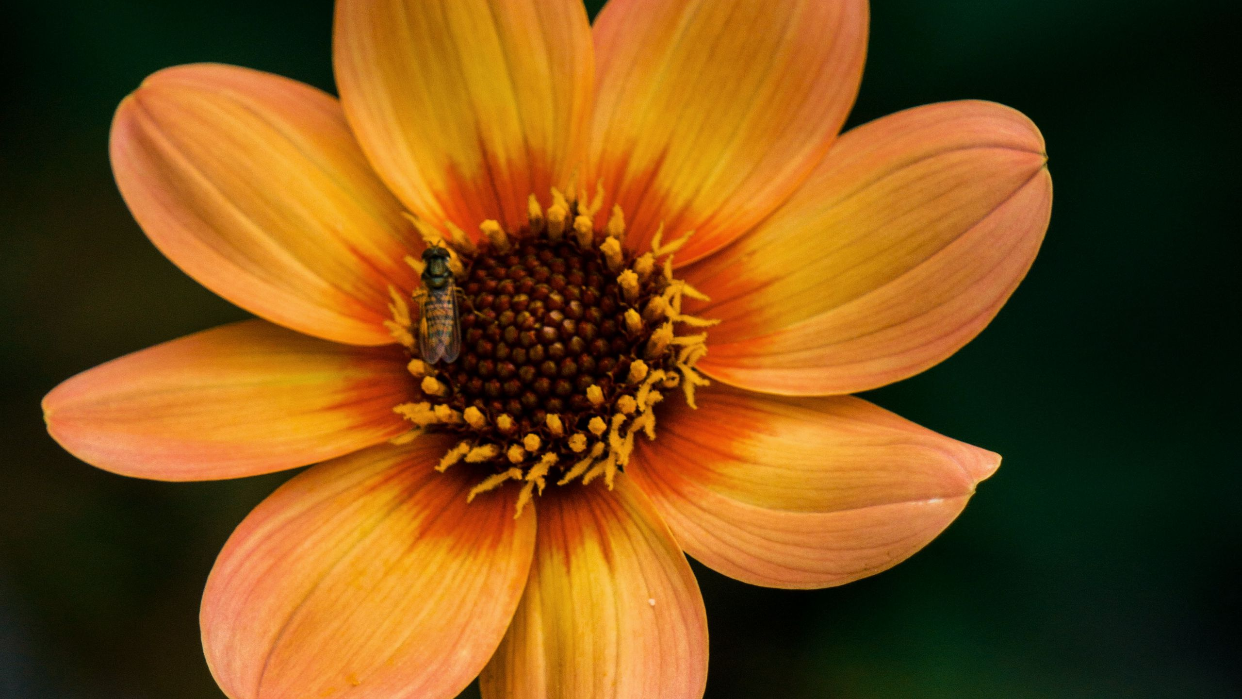 2560x1440 Wallpaper flower, bloom, plant, insect