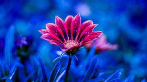 Preview wallpaper flower, dew, drops, petals, blue