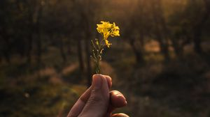 Preview wallpaper flower, hand, yellow, ray