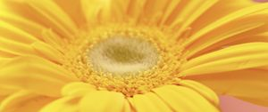 Preview wallpaper flower, petals, bright, yellow, macro