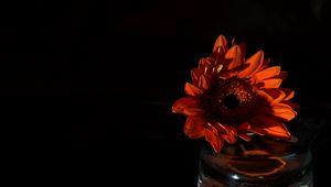 Preview wallpaper flower, petals, dark, red