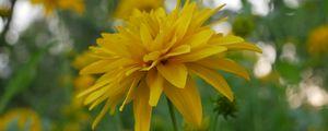 Preview wallpaper flower, petals, plant, macro, yellow