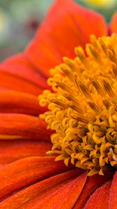 Preview wallpaper flower, petals, pollen, red, macro