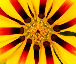 Preview wallpaper flower, petals, pollen, yellow, macro