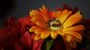 Preview wallpaper flower, petals, wedding rings, wedding