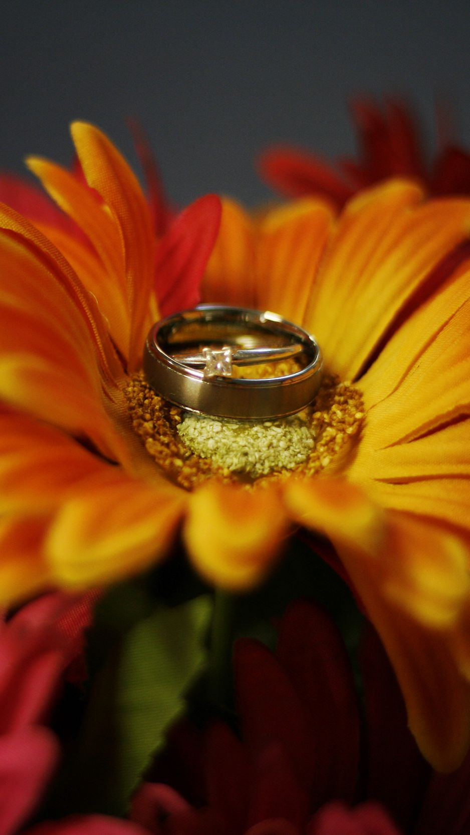 938x1668 Wallpaper flower, petals, wedding rings, wedding