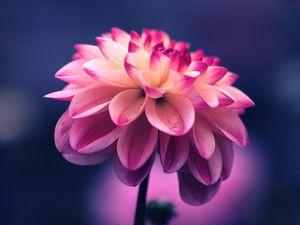 Preview wallpaper flower, pink, petals, bud, close-up