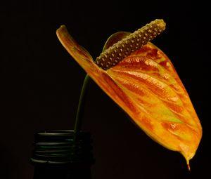Preview wallpaper flower, plant, macro, dark