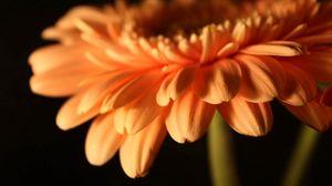 Preview wallpaper flower, stem, plant, petals