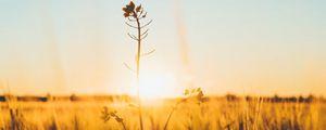 Preview wallpaper flower, stem, sunset, grass, macro, blur
