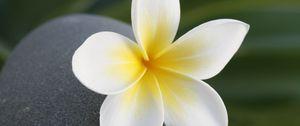 Preview wallpaper flower, stone, meditation, balance