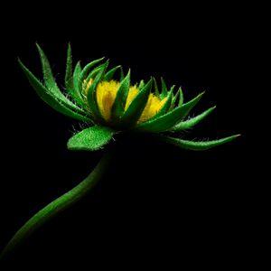 Preview wallpaper flower, sunflower, artificial