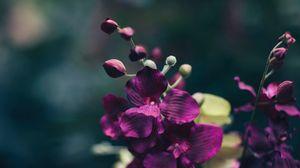 Preview wallpaper flower, violet, petals