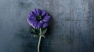 Preview wallpaper flower, violet, stem, background