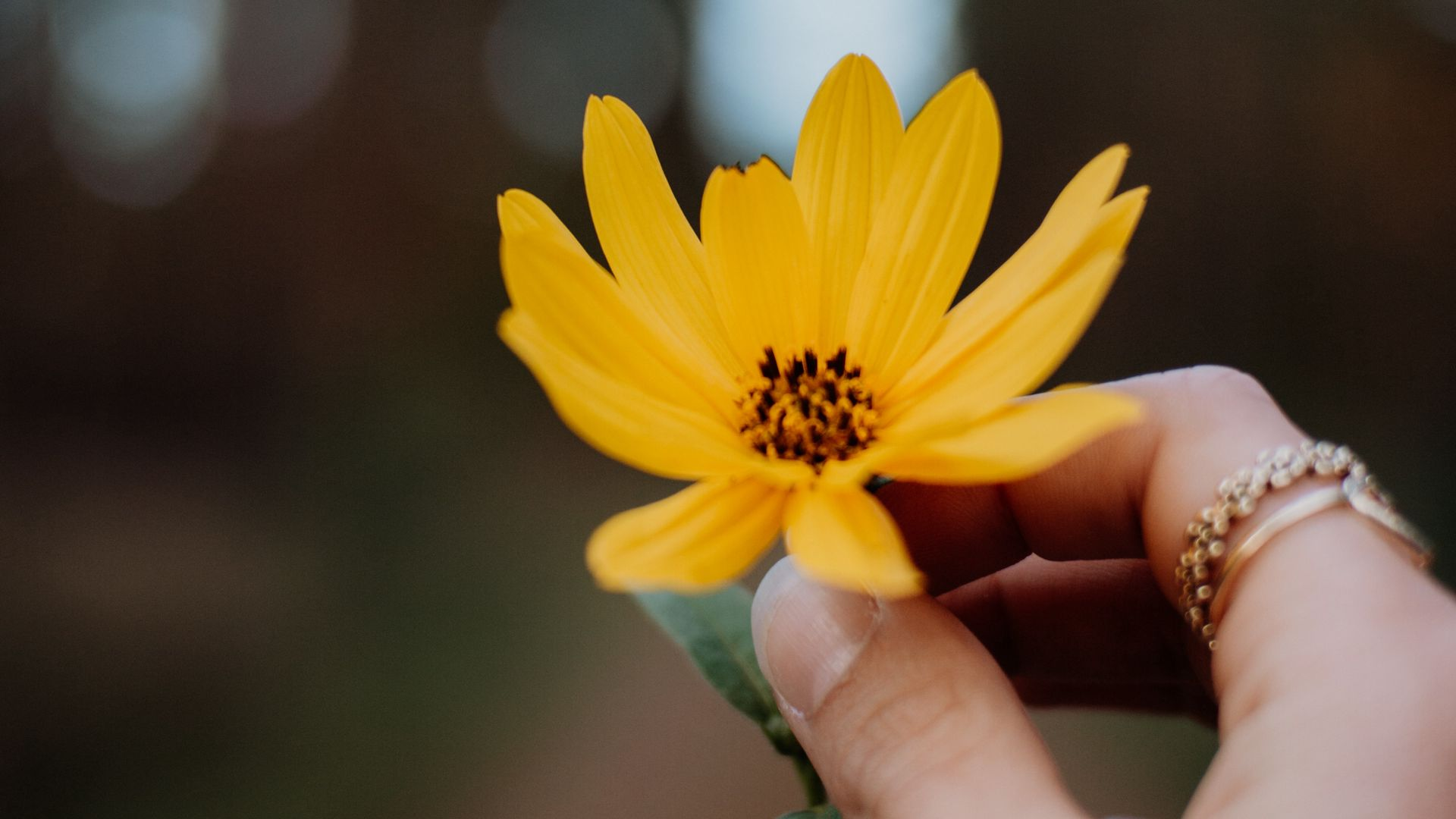 1920x1080 Wallpaper flower, yellow, hand, fingers, closeup