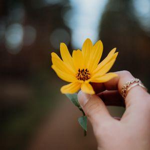 Preview wallpaper flower, yellow, hand, fingers, closeup