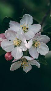 Preview wallpaper flowering, spring, flowers, branch, blur