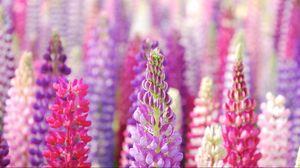Preview wallpaper flowers, beautiful, petals
