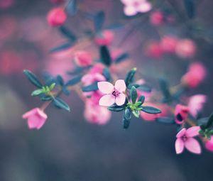 Preview wallpaper flowers, bloom, blur