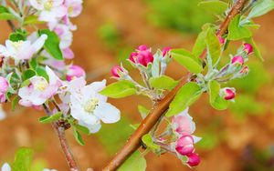 Preview wallpaper flowers, bloom, spring, branch, apple