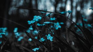 Preview wallpaper flowers, blue, field, blur