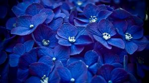 Preview wallpaper flowers, blue, petals