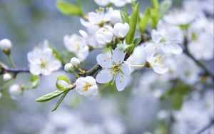 Preview wallpaper flowers, branches, plants, flowering