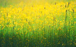Preview wallpaper flowers, field, yellow, grass